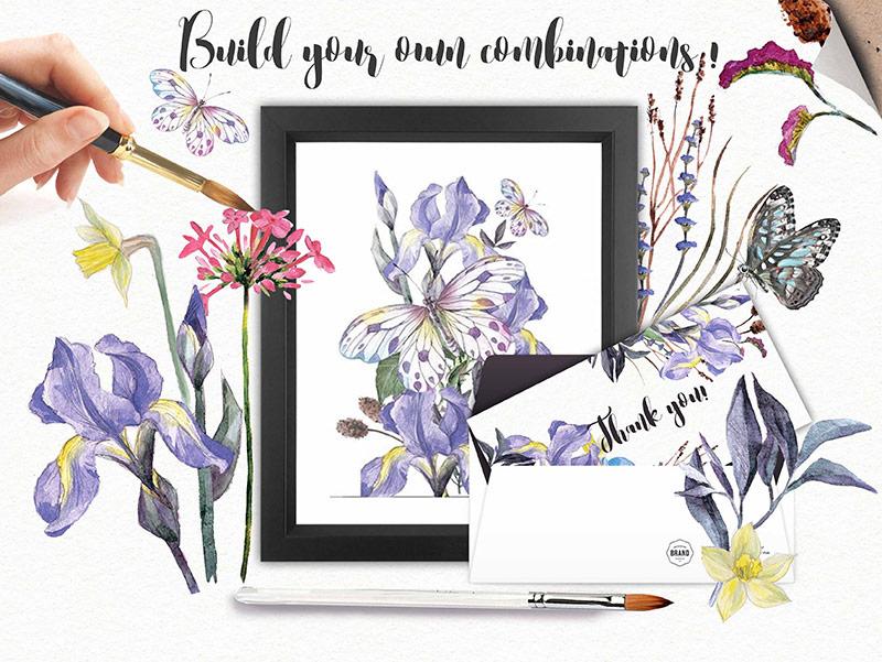 iris-flowers-3-o