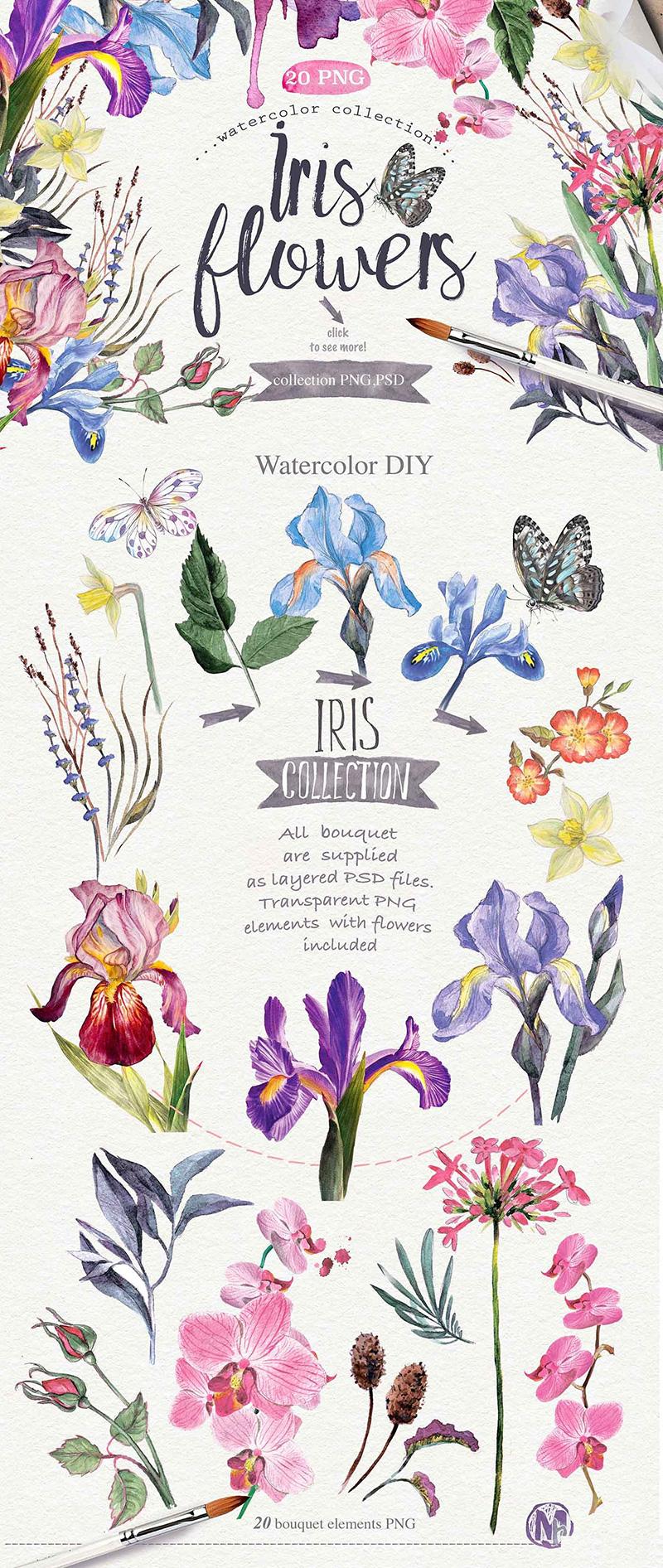 iris-flowers-o