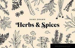 20+草药和香料手绘图案设计素材 Hand Drawn Herbs & Spices