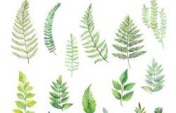 6款水彩手绘绿植蕨叶剪贴画