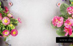 植物花卉园艺高清背景平面设计素材