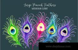 水彩孔雀毛插画 Watercolor Peacock Feathers