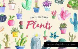 多肉植物手绘水彩插图合集 Watercolor Succulent Collection