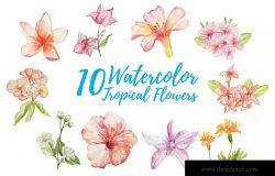10款绽放的热带花卉水彩插画套装 10 Watercolor Tropical Flower Illustration