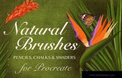 20种超级多功能Procreate笔刷合集[铅笔/粉笔/着色器] Natural Brushes for Procreate