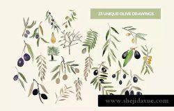 橄榄树叶水彩系列插图合集