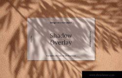 逼真植物阴影背景样机合集 Realistic Shadow Mock-Up Collection