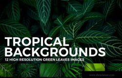 12张热带植物叶子高清背景图素材 12 Tropical Leaves Backgrounds