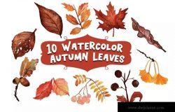 10个秋季落叶水彩插画素材 10 Watercolor Autumn Leaves