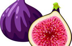 夏季热带水果