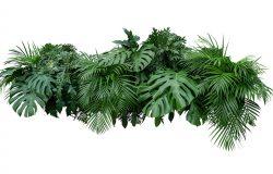 热带叶,叶,植物,灌木,花卉排列,自然背景,孤立的白色背景,剪裁路径包括。