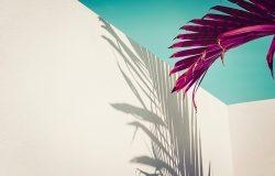紫色的棕榈叶映衬着青绿色的天空和白色的墙壁。