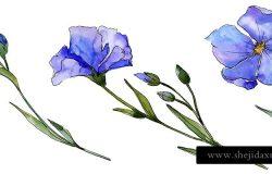 蓝色亚麻。花植物花。野生春叶野花分离。用于背景、纹理、包装图案、框架或边框的水瓶野花。
