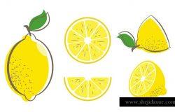 新鲜柠檬叶水果。柠檬向量插图集。整片切成两片柠檬。柑橘收藏。柠檬标志或图标。