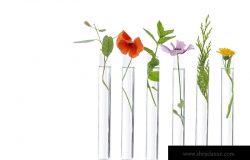 实验室科学家,生物和化学实验中试管上美丽的花朵。