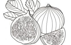 分支矢量图。手绘的无花果果。夏季美食雕刻风格插图。详细的复古植物素描。很适合标签海报打印菜单。