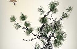 墨式松树鸟