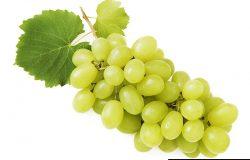 葡萄枝,叶在白色背景下分离