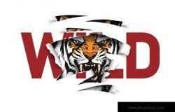 狂野的口号被老虎撕毁了