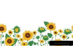 与向日葵天衣无缝的边框。孤立的元素。收集装饰花卉设计元素。水彩风格的复古矢量插图。