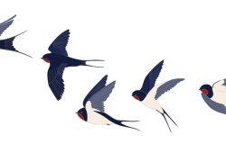 飞燕群是孤立的。彩色矢量图