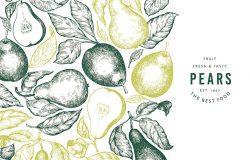 梨设计模板手绘矢量园林水果插图。雕刻风格花园古旧植物旗帜。