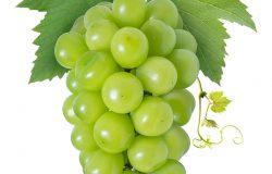 甜绿葡萄,叶分离于白光麝香葡萄上,白色背景下用剪裁路径分离