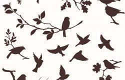 一组鸟和树枝。鸟类和树枝的装饰轮廓:橡木、枫树、桦木、罗文等