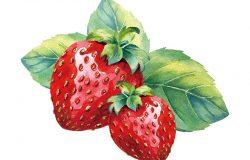 白色背景下的矢量水彩草莓枝