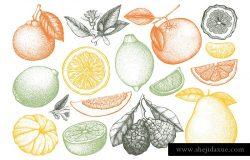 陈年油墨,手绘收集的柑橘类水果,在白色背景下分离。柑桔果实素描