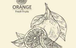背景与橙色。手绘