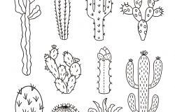 仙人掌矢量图。手动绘制的轮廓仙人掌。仙人掌植物自然要素