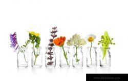白色背景下小玻璃瓶中不同的治疗花