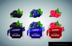 现实浆果标签设置黑莓,蓝莓和覆盆子水果分离。浆果果酱标签设计模板。
