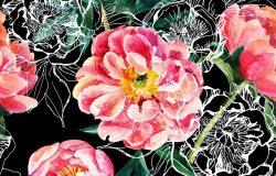 水彩画与素描牡丹