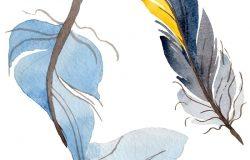 水彩画鸟羽从翅膀分离而来。用于背景、纹理、包装图案、框架或边框的野生花卉。