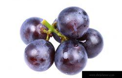白色上分离的协和葡萄