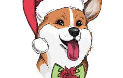 手拉的狗。可爱的威尔士科吉,戴着一顶带蝴蝶结和圣诞花的红色圣诞老人帽子。狗年。狗印/狗海报/狗插图