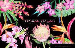 手绘水彩热带叶状花素材 Watercolor Tropical Foliage Flower