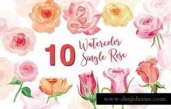 10个单株玫瑰水彩插图素材 10 Watercolor Single Rose Illustration