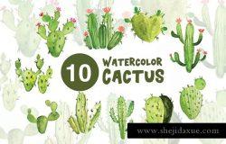 10款绿色植物仙人掌水彩插图 10 Watercolor Cactus Illustrations